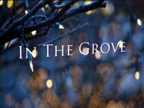 In The Grove - December, 2014